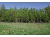 Стародачная поляна 2
